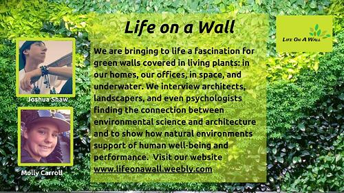 Life on a Wall